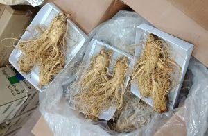 Sâm Tươi Hàn Quốc Loại 3 Củ 1kg